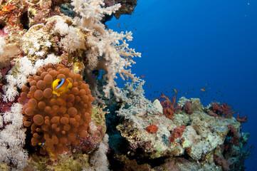 Bio illuminecent anemone on a coral reef