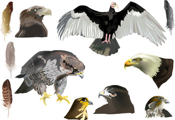isolated eagles and feathers collection