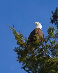 Eagle's Pride