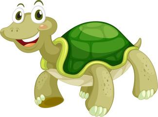 Animated turtle