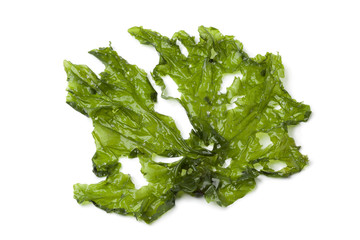 Leaf of Sea lettuce