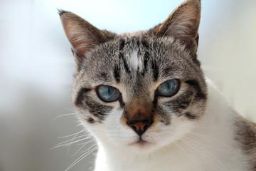 muso gatto in primo piano