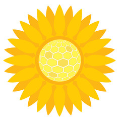 Sunflower with honeycombs vector background concept