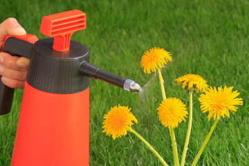 Unkrautbekämpfung mit Herbizide - Spritzmittel, Pflanzenschutzm