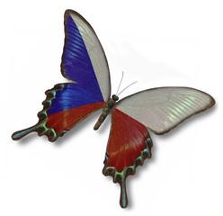 Czechia flag on butterfly