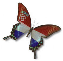 Croatia flag on butterfly