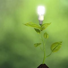 Growing green energy