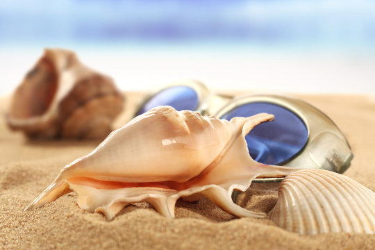 shells and sun glasses