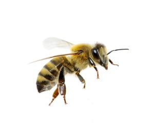 Foto op Textielframe Bee bee
