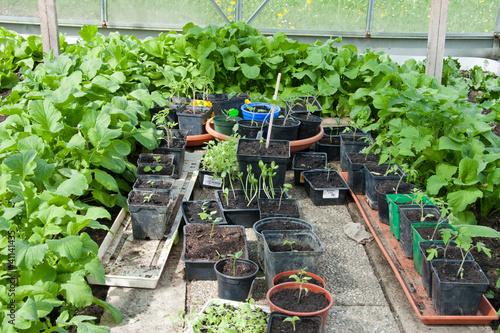 pflanzen im gew chshaus stockfotos und lizenzfreie bilder auf bild 41141435. Black Bedroom Furniture Sets. Home Design Ideas