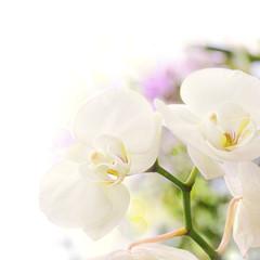 orchidées, bordure décorative
