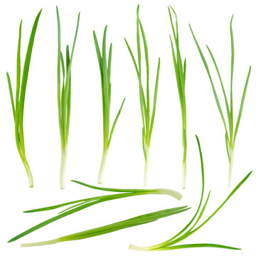 Young green onion set isolated on white