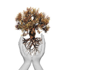 Conceptual tree with roots held in hands
