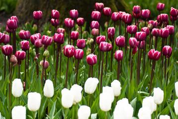 Obraz wiosenne kwiaty - fototapety do salonu