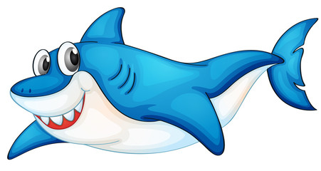 Comical shark illustration
