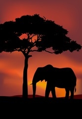 African Sunset background with elephant