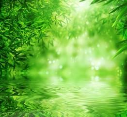 Obraz Zen Bamboo Forest,sun and water. - fototapety do salonu