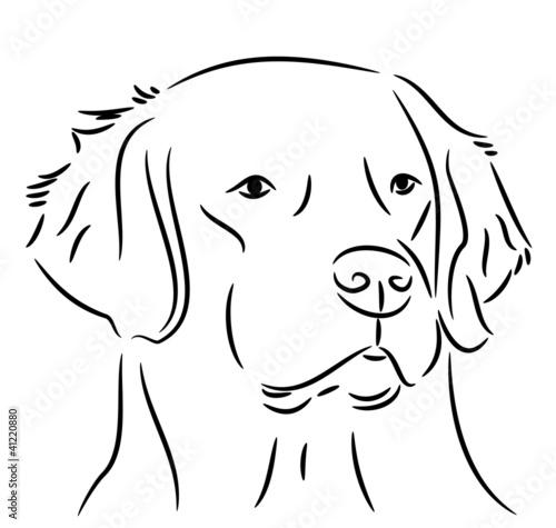 Golden retriever portrait black white fichier vectoriel libre de droits sur la banque d 39 images - Dessin golden retriever ...