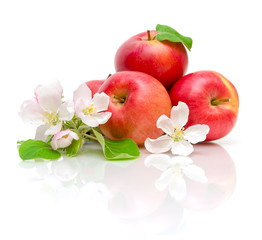 flowers of apple and red apple on a white background