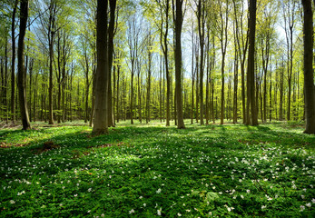 Spring in forest