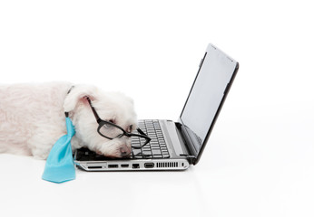 Wall Mural - Tired or overworked dog sleeping at computer laptop