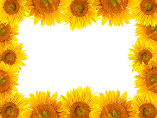 Sunflowers frame with white background
