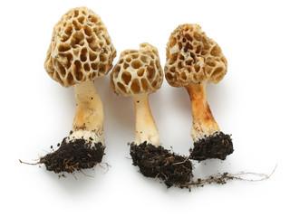 Fototapeta morels, edible mushrooms obraz
