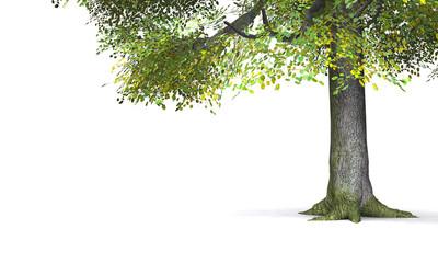 Baumdetails freigestellt 01