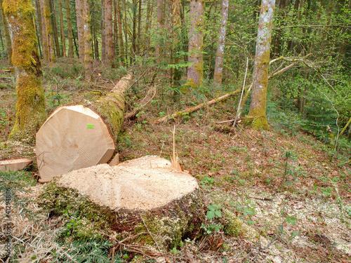 arbre coupe photo libre de droits sur la banque d 39 images image 41294886. Black Bedroom Furniture Sets. Home Design Ideas
