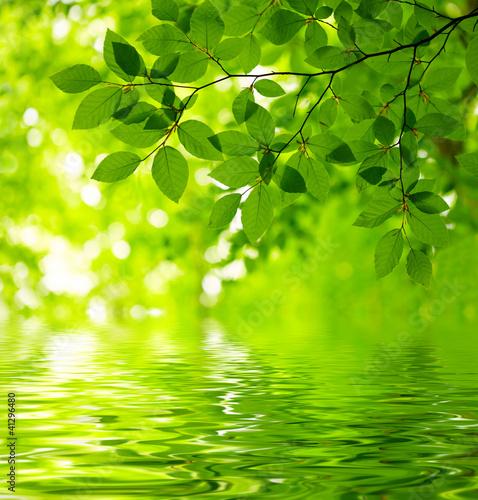 Fototapete Green leaves