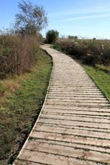 Path Ullal de Baldovi wetland  in La Albufera nature reserve Val