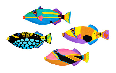 Collection of trigger fishes