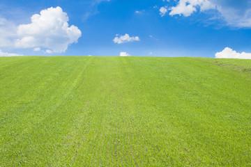 Bieszczadzka łąka