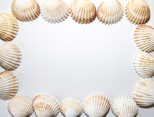sea shell frame