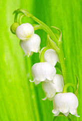 Poster de jardin Macro Lily