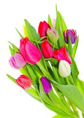 Spoed Fotobehang Macro tulip