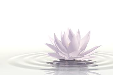 Obraz Floating waterlily - fototapety do salonu