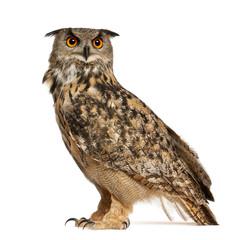 Papiers peints Chouette Eurasian Eagle-Owl, Bubo bubo, a species of eagle owl