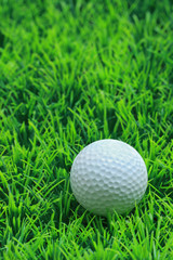 A golf ball on the green grass