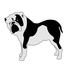 Bulldog abstract silhouette