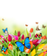 Colored tulips flowers with exotic butterflies