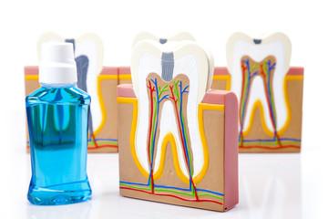Dental equipment, teeth care and control, studio shots