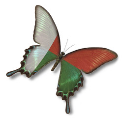 Madagascar flag on butterfly