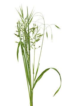 bouquet de brins d'herbe