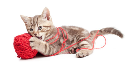 Papier Peint - tabby kitten playing red clew or ball
