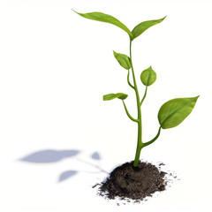 Growing life