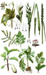 Diseases of plants