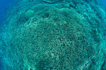 Hard corals from above