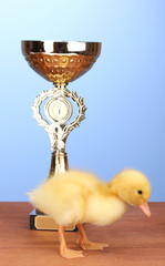 Duckling and champion cup on wooden table on blue background