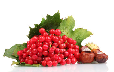 red berries of viburnum in wooden box and chestnuts isolated